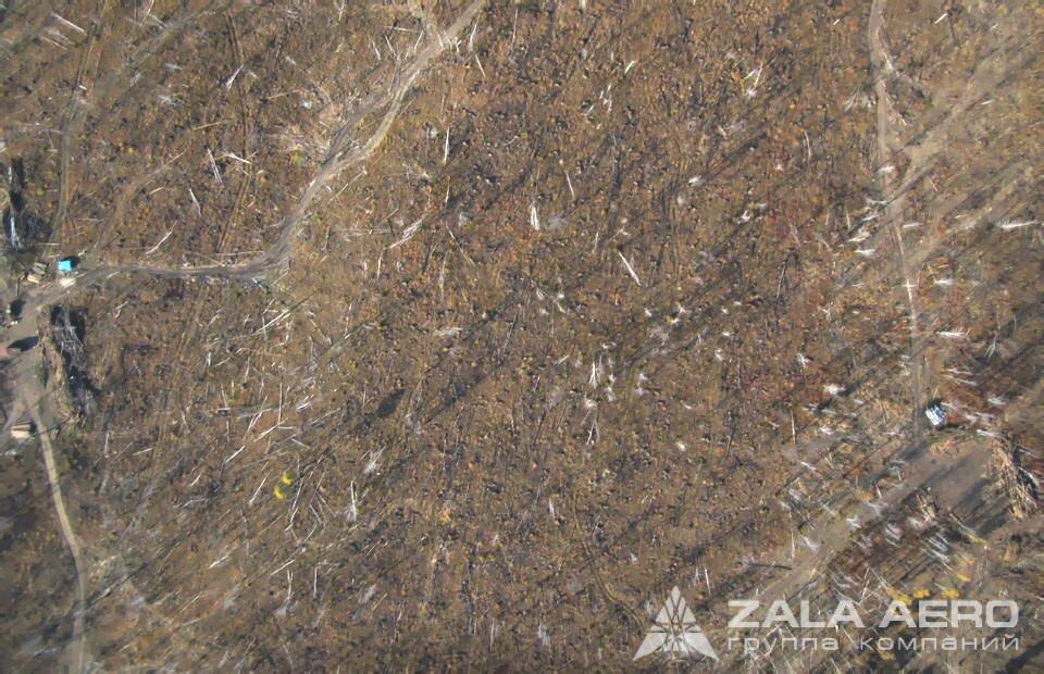 ZALA вырубка леса 10