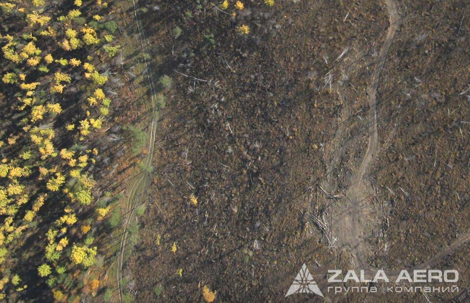 ZALA вырубка леса 11