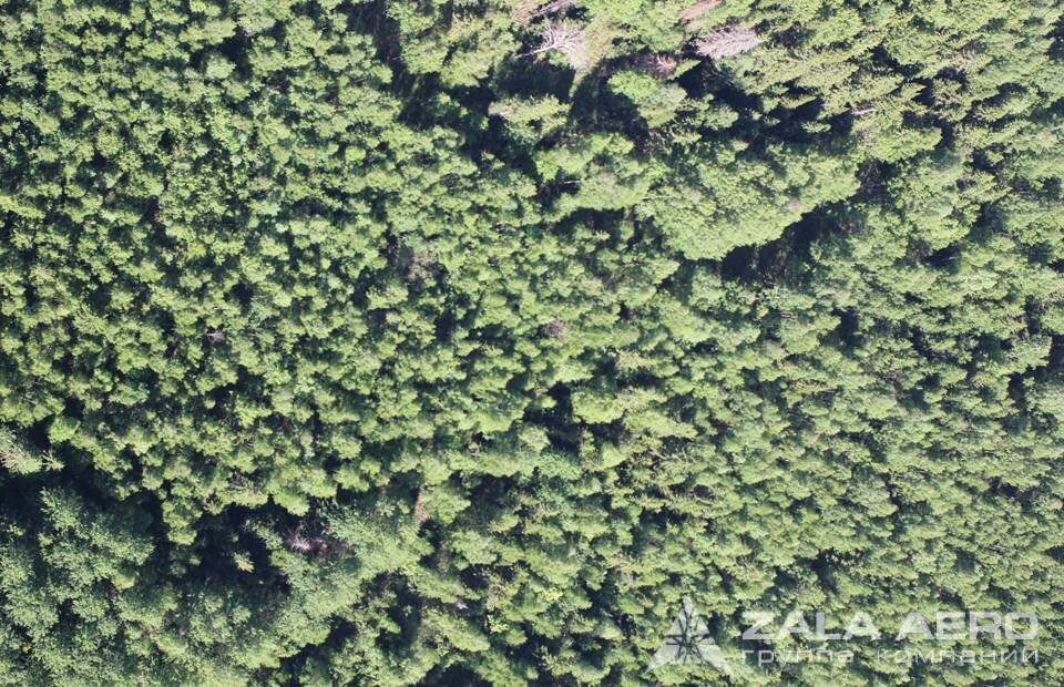 ZALA вырубка леса 4